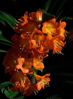 Blütendolde 10 und 11 (2014)