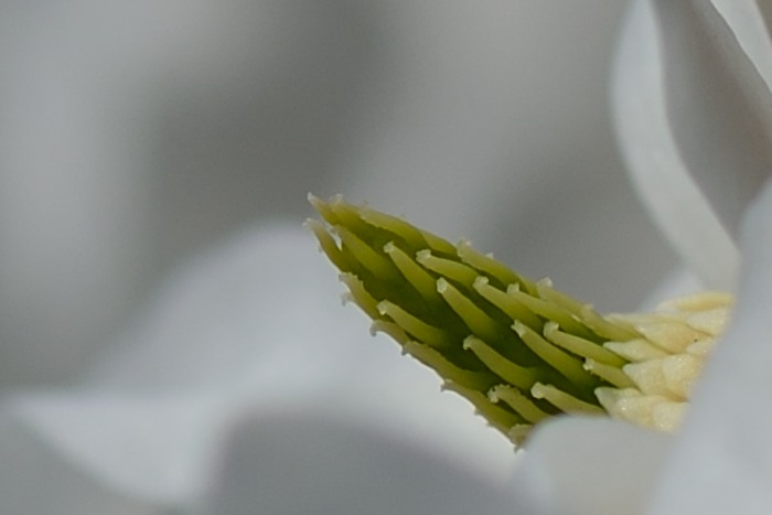 Blütenfäden
