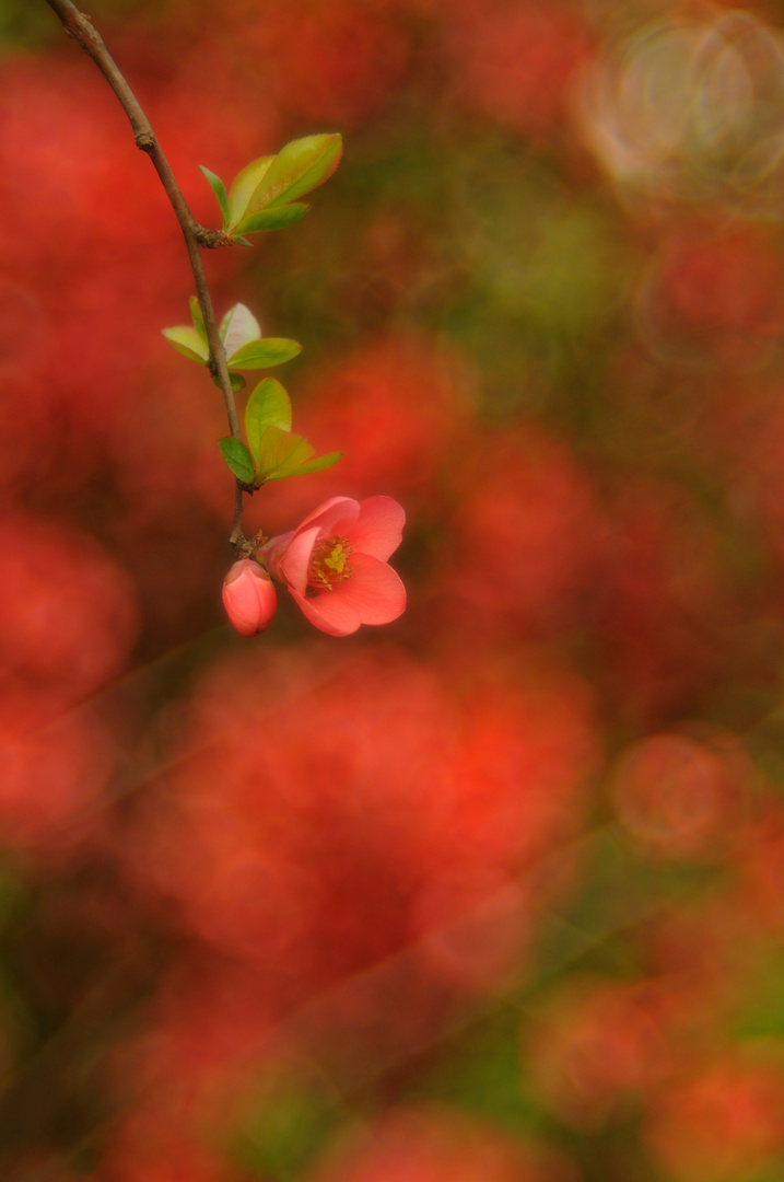 Blütenfest