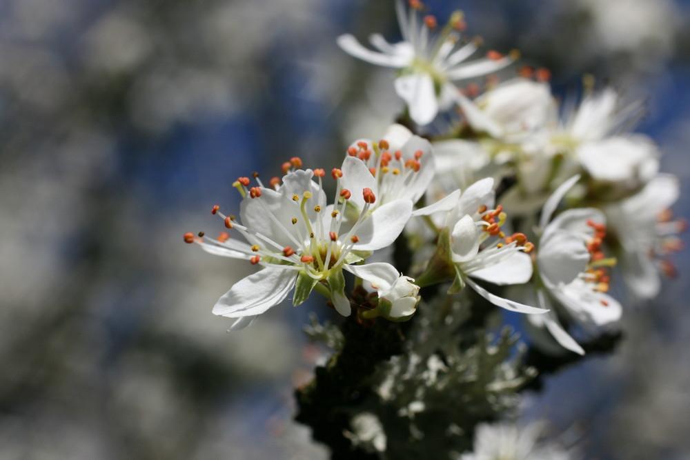 Blütenfeuerwerk 2