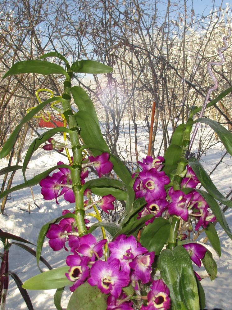 Blütenfreude am Winterfenster
