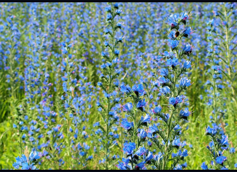 Blütenfreuden