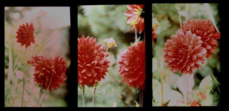Blütenfrühe