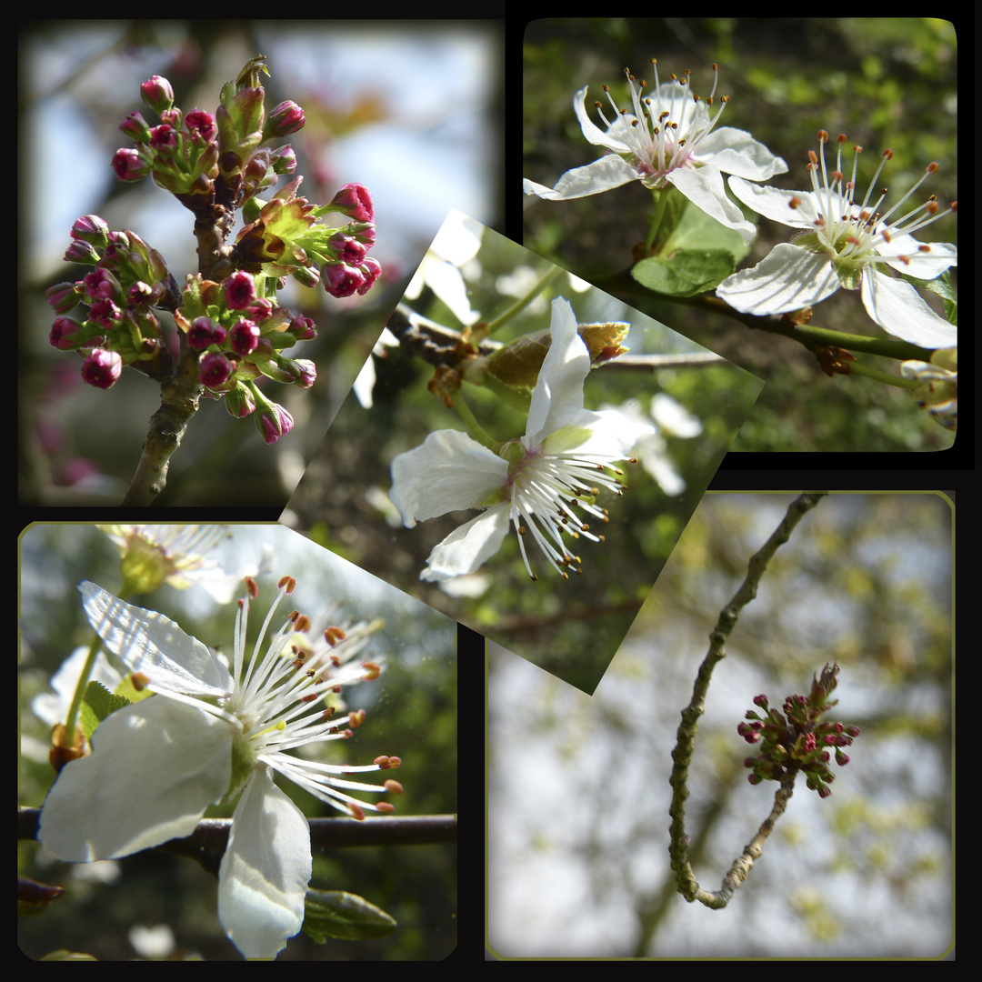 Blütenfülle - Blütenkontraste
