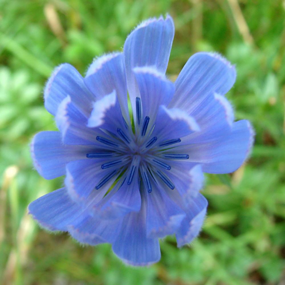 Blütengalaxie in Blau