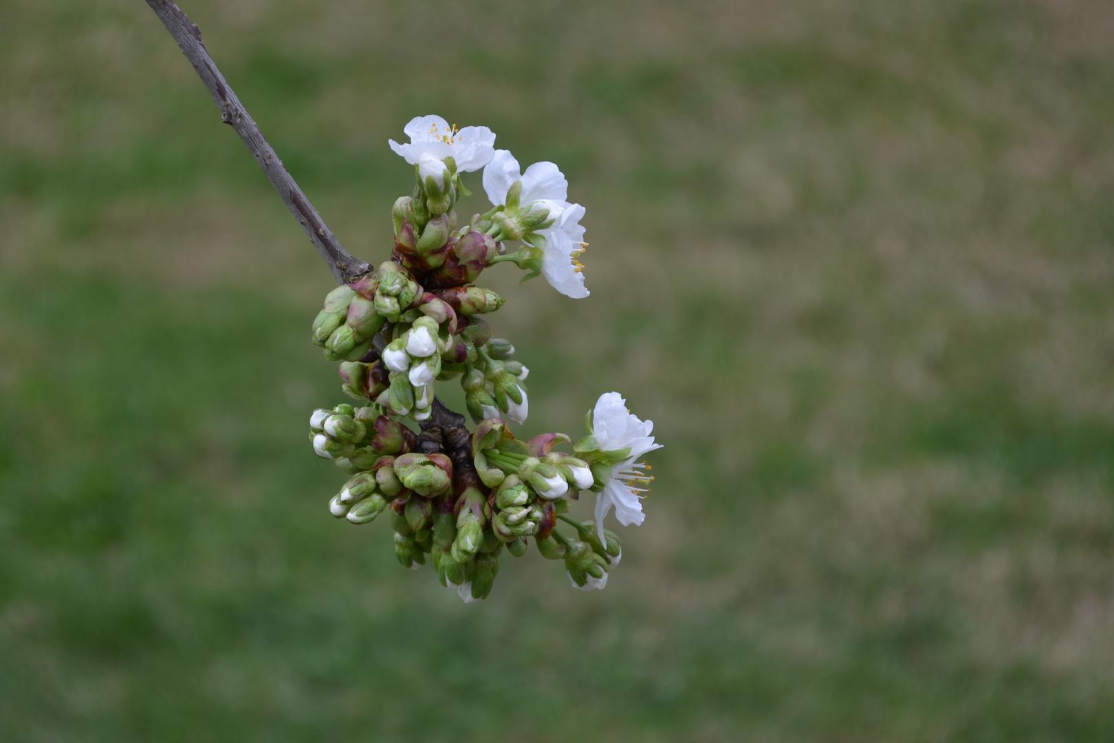 Blütengeburt