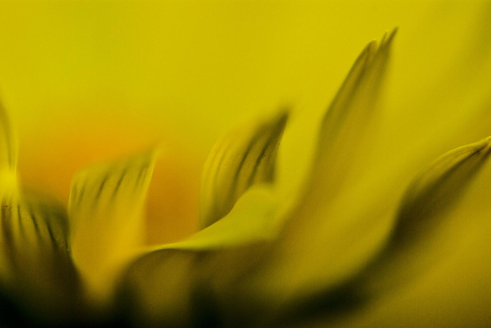 Blütengemälde