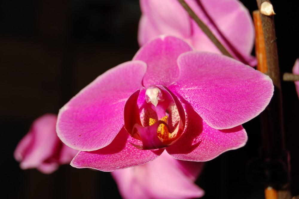 Blütengesicht