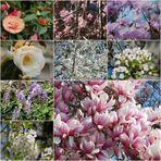 Blütengrüße aus der Schweiz