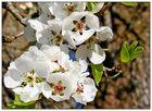 Blütengrüße