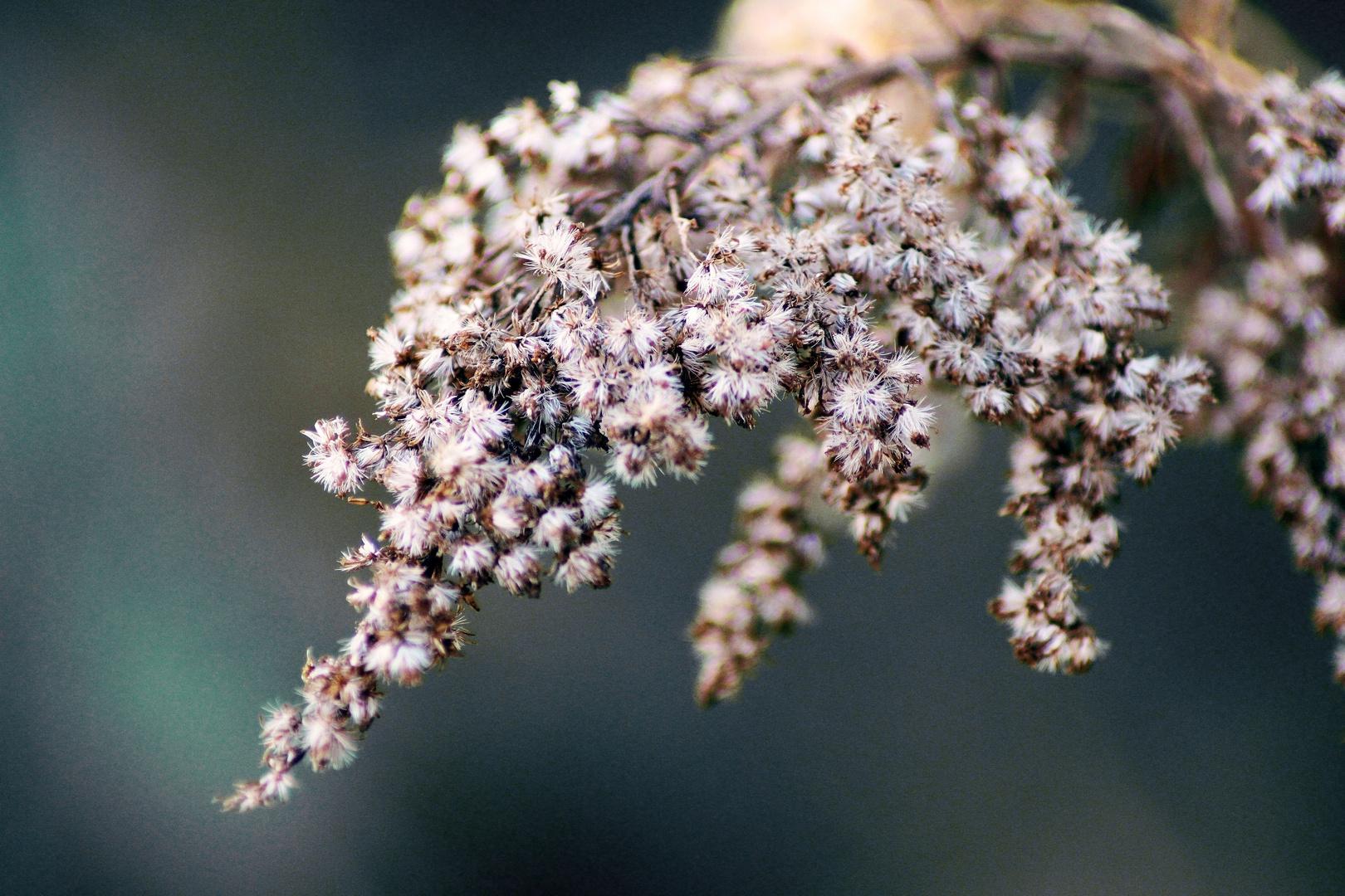 Blütengruppe