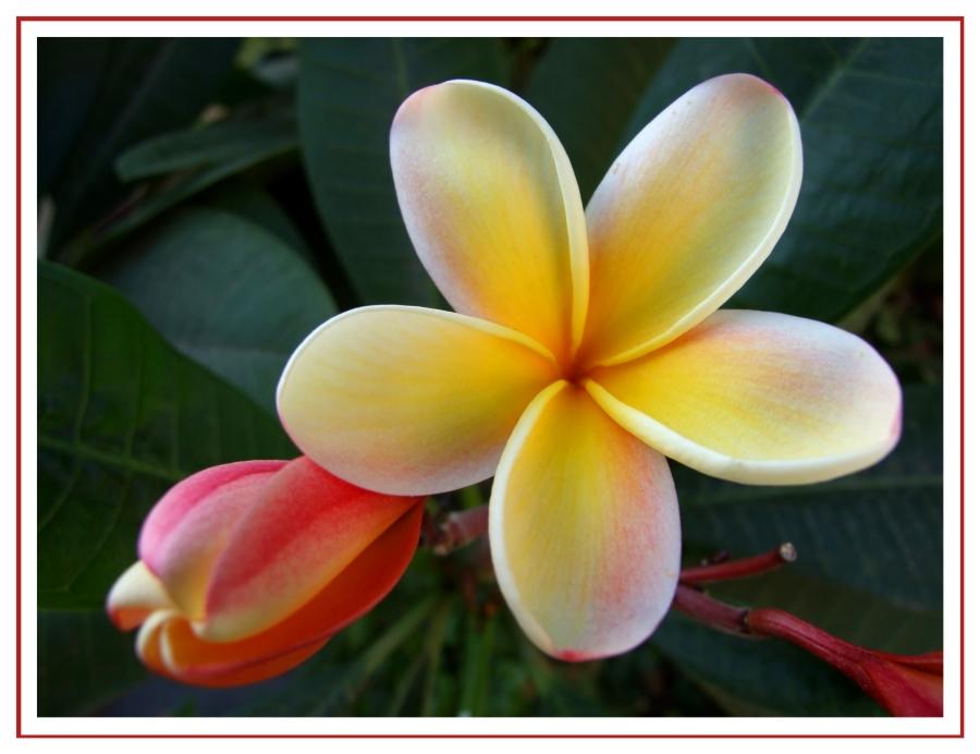Blütengruß aus Teneriffa