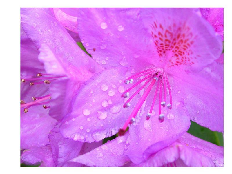 Blütengruß mal ganz in lila - ;-)))