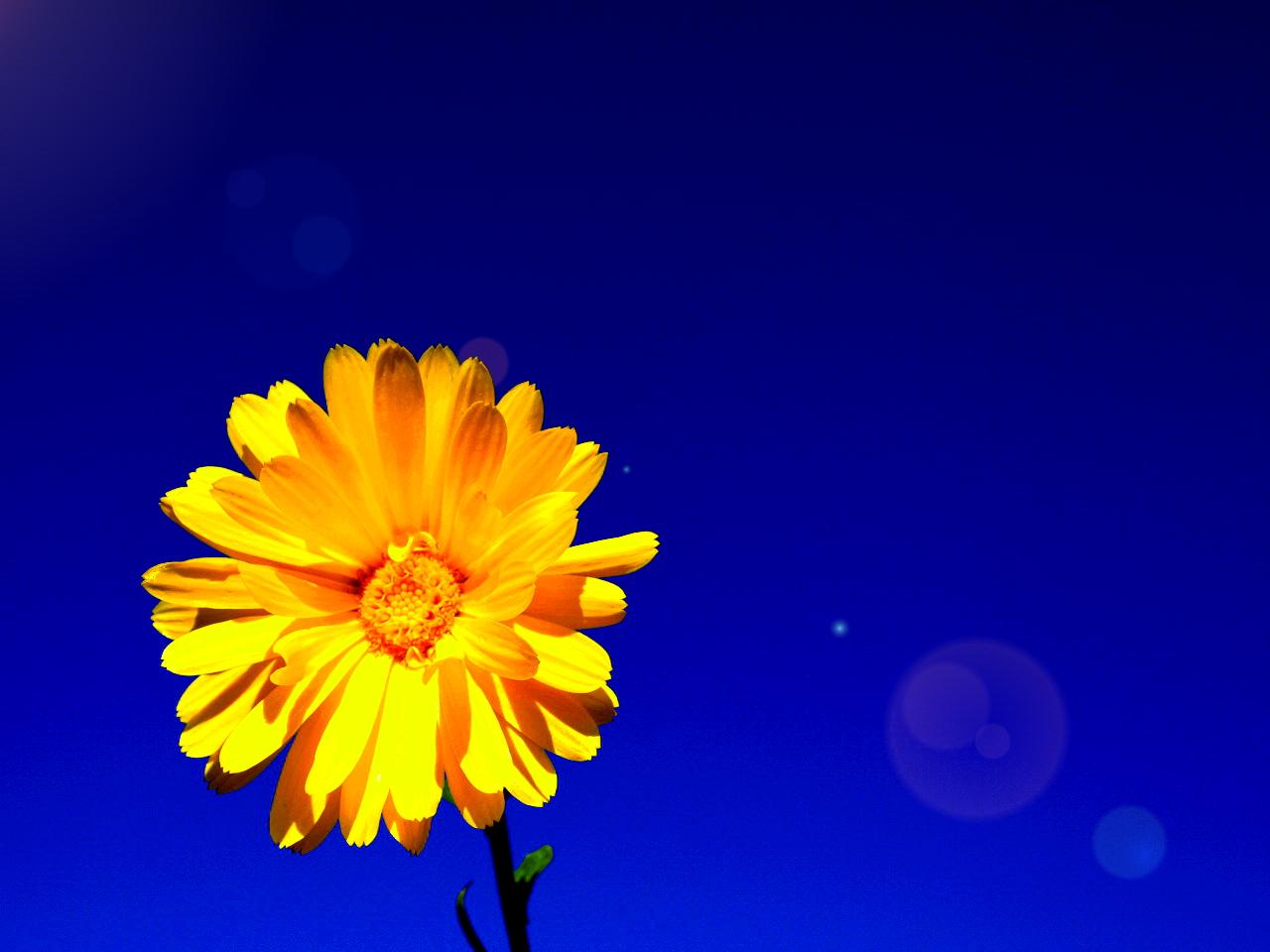 Blütenhimmel