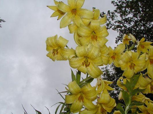 Blütenkelche am Himmel