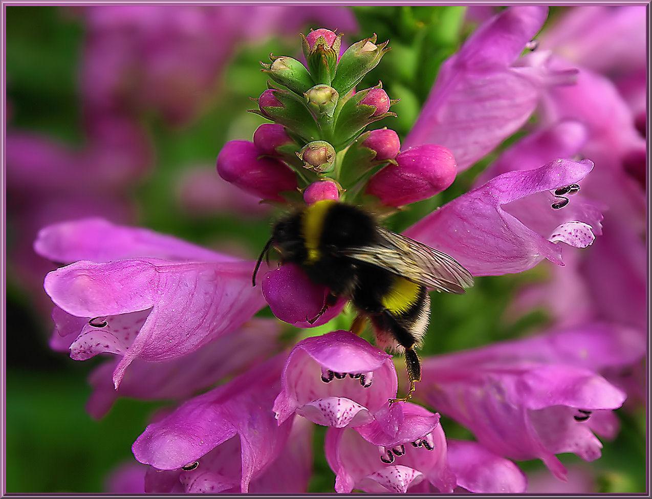 Blütenkletterer