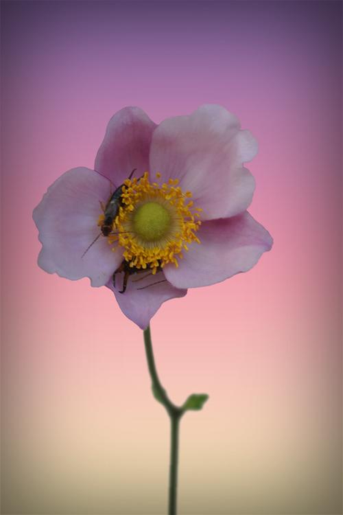 Blütenknipser