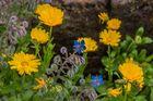 Blütenkomposition - Sophiengarten/Eschwege/Hessen