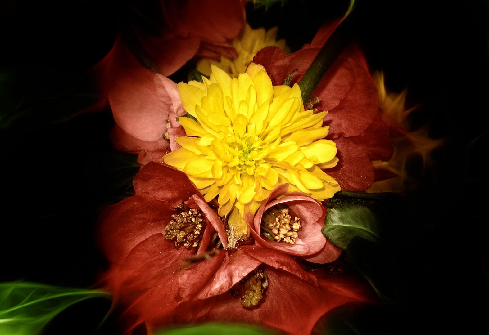 Blütenkuschler