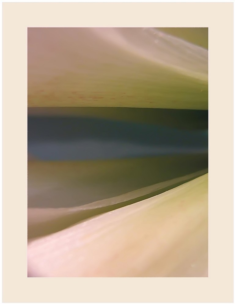 Blütenlandschaft (6)