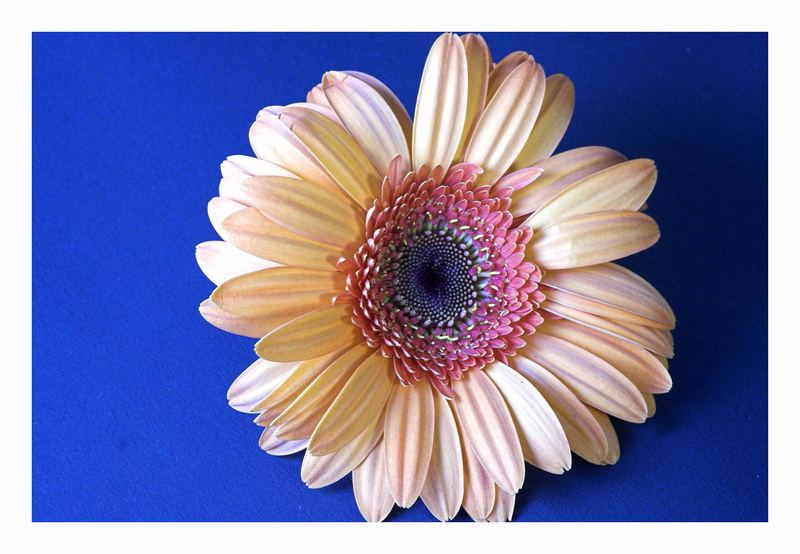 Blütenmakro _ 2