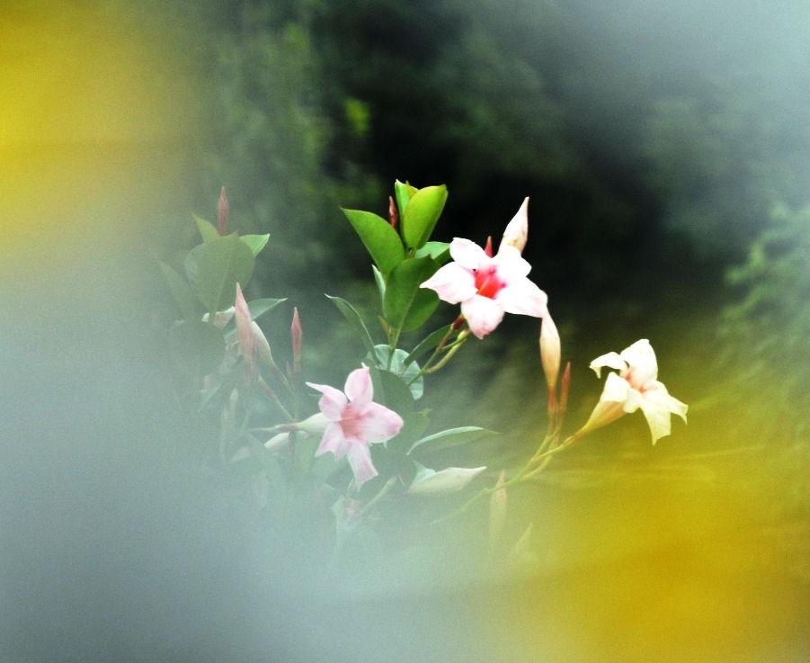 Blüten...mal anders