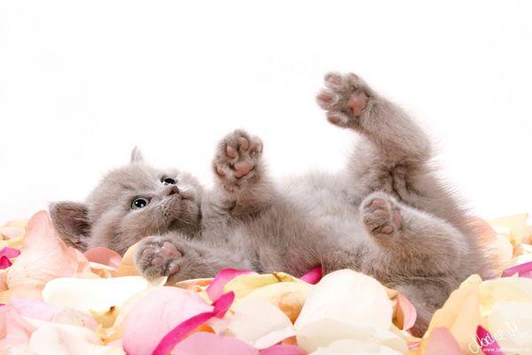 ...Blütenmeer...