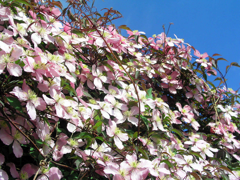 Blütenmeer (2)