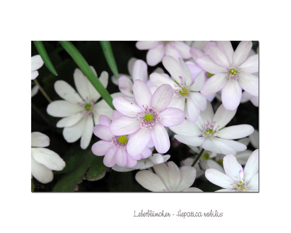 **Blütenmeer**
