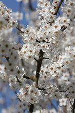 Blütenmeer im Wald