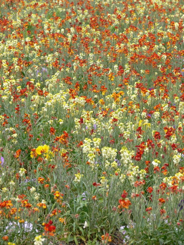 Blütenmeer Jardin Luxembourg (Paris)