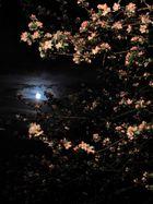 Blütenmond