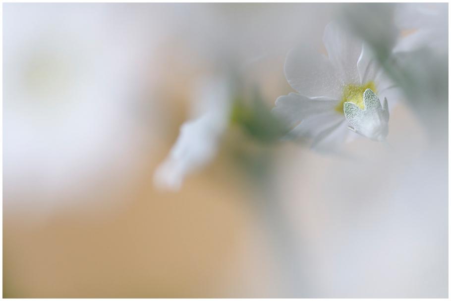 Blütennebel