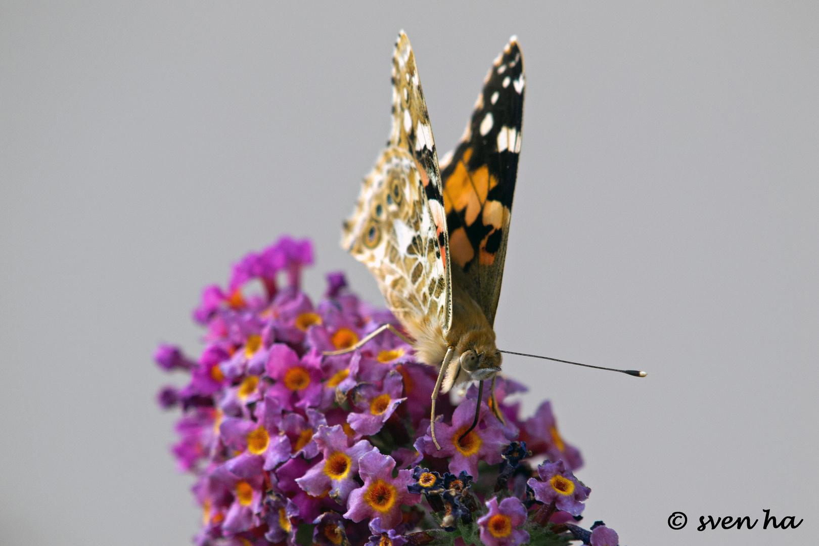 Blütennektar