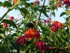 Blütennektar-Suche