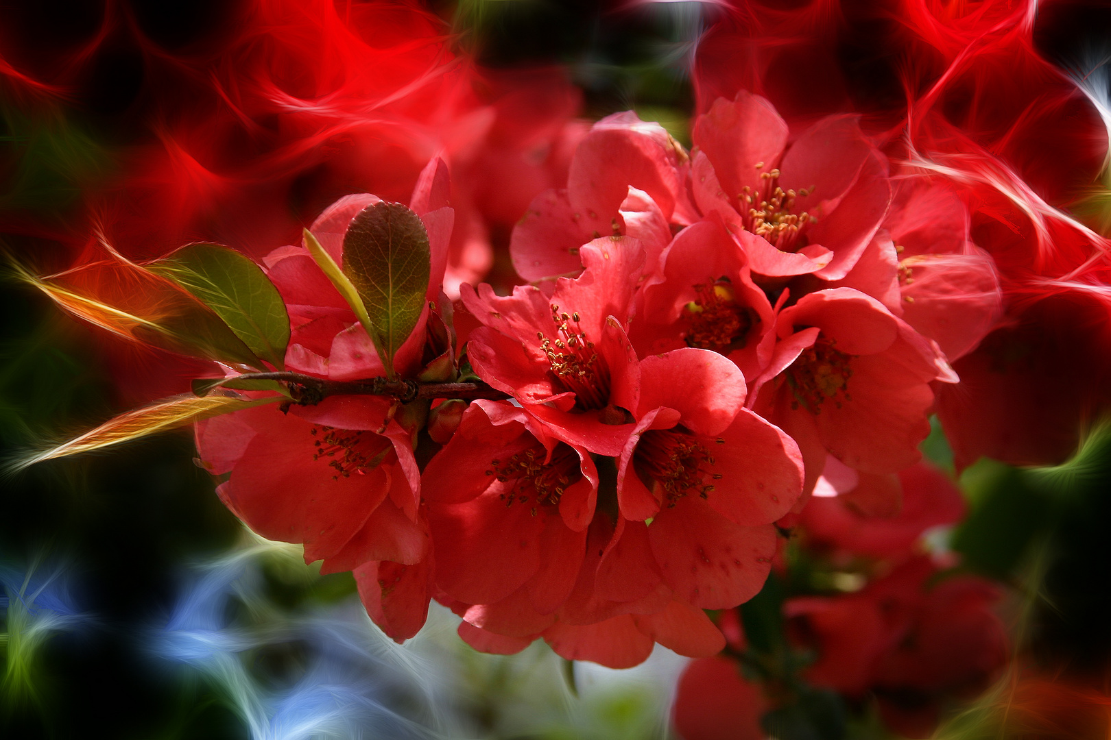 Blütenparade