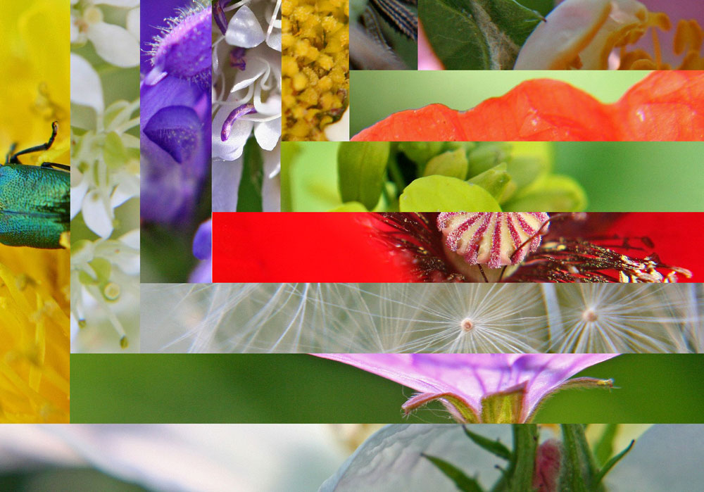Blütenparkett