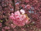 Blütenperspektive