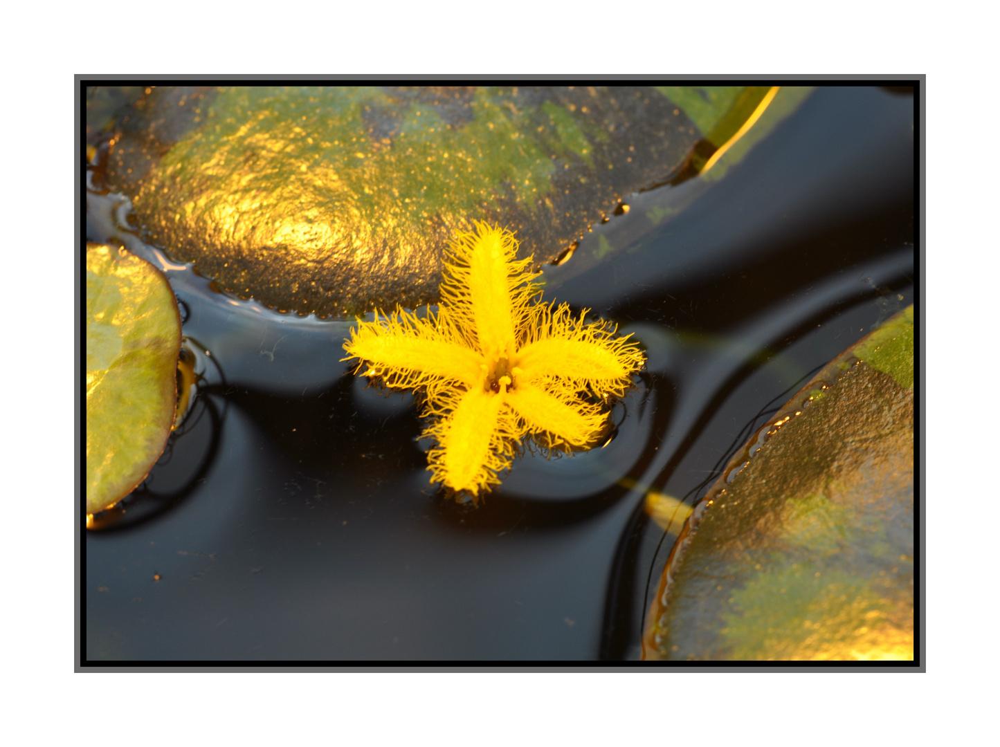 Blütenpoesie in gelb/gold schimmernd