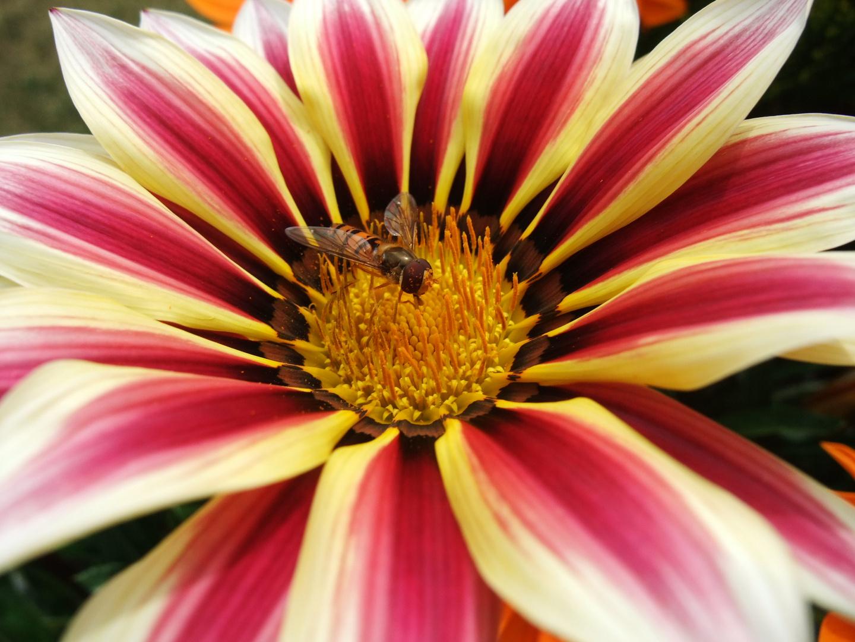 Blütenpollenbad/Schlaraffenland