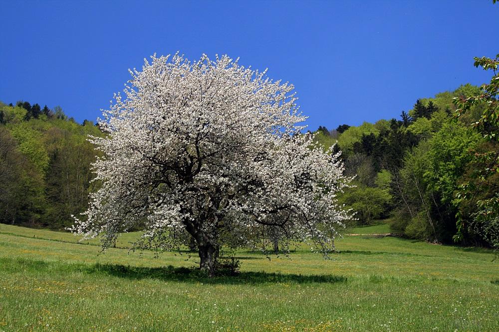 Blütenpracht-1
