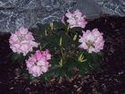 Blütenpracht 2