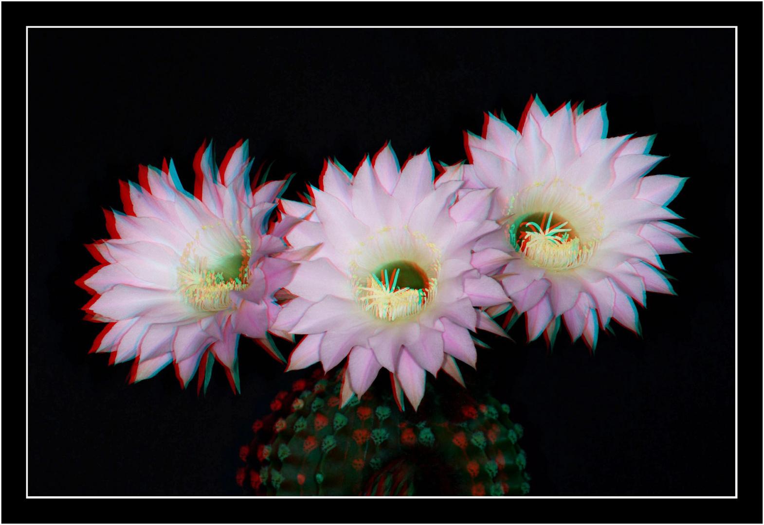 Blütenpracht 3 in 3D