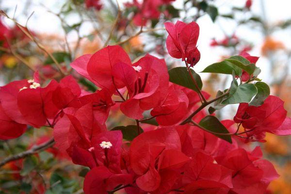 Blütenpracht