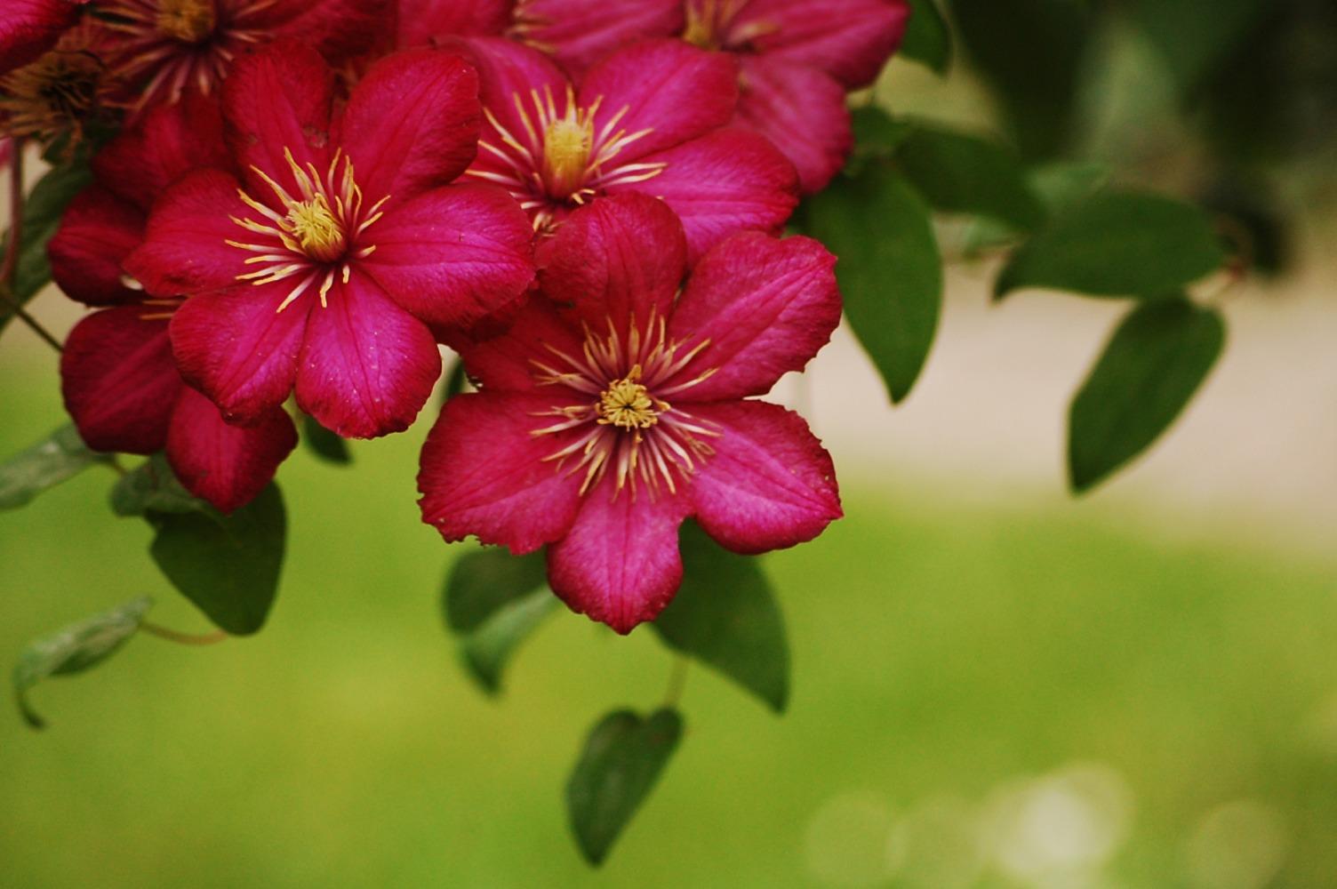 Blütenpracht..