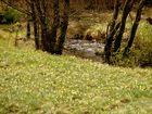 Blütenpracht am Pertlenbachtal im Deutsch-Belgischen Grenzgebiet
