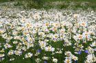 Blütenpracht auf der LAGA 2014 in Zülpich