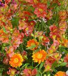 Blütenpracht (BUGA 2007 Gera)