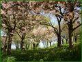 Blütenpracht von Margot H.