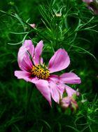 Blütenpracht I ...